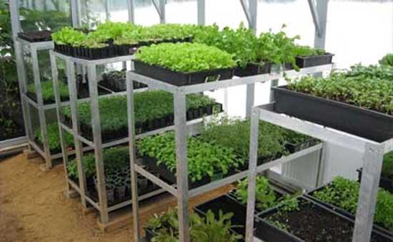 Основные нюансы при выращивании рассады в теплице