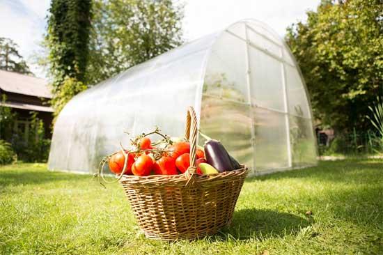 Теплицы на Сахалине - возможность удовлетворить спрос на овощи